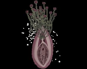cultura menstrual imagen
