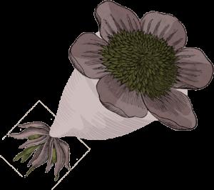 copa-flor-ilustracion
