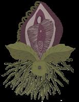 vulva-planta